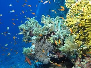Дедалус (Daedalus Reef)