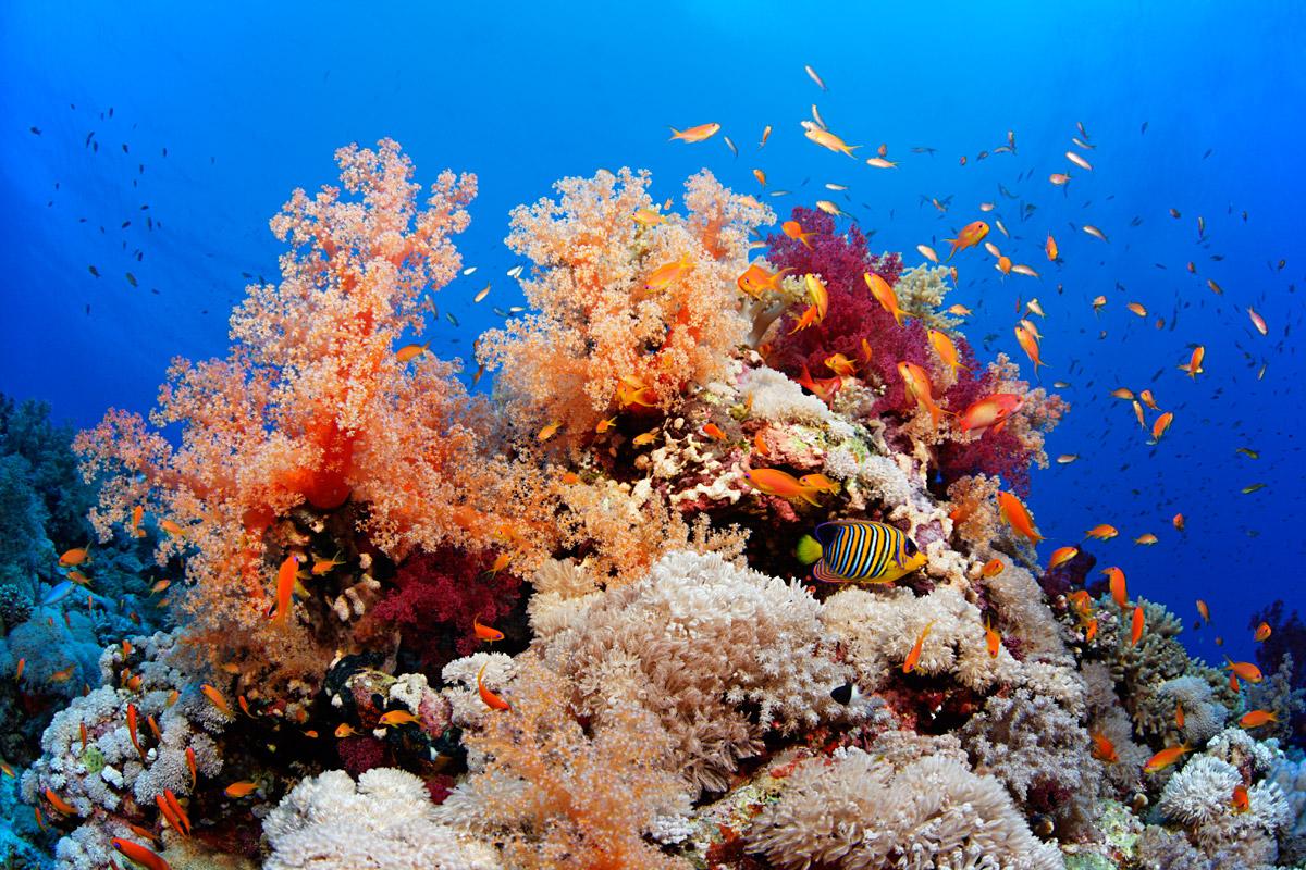 Эльфинстоун (Elphinstone Reef)