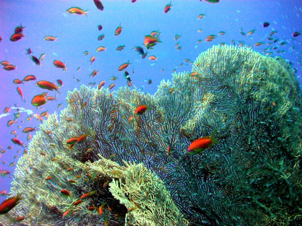 Панорама Риф (Panorama Reef)