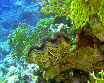 SDI Marine Ecosystems Awareness Diver Specialty