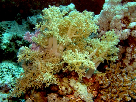 SDI Underwater Photografer Diver Specialty