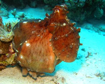 SDI Underwater Video Diver Specialty